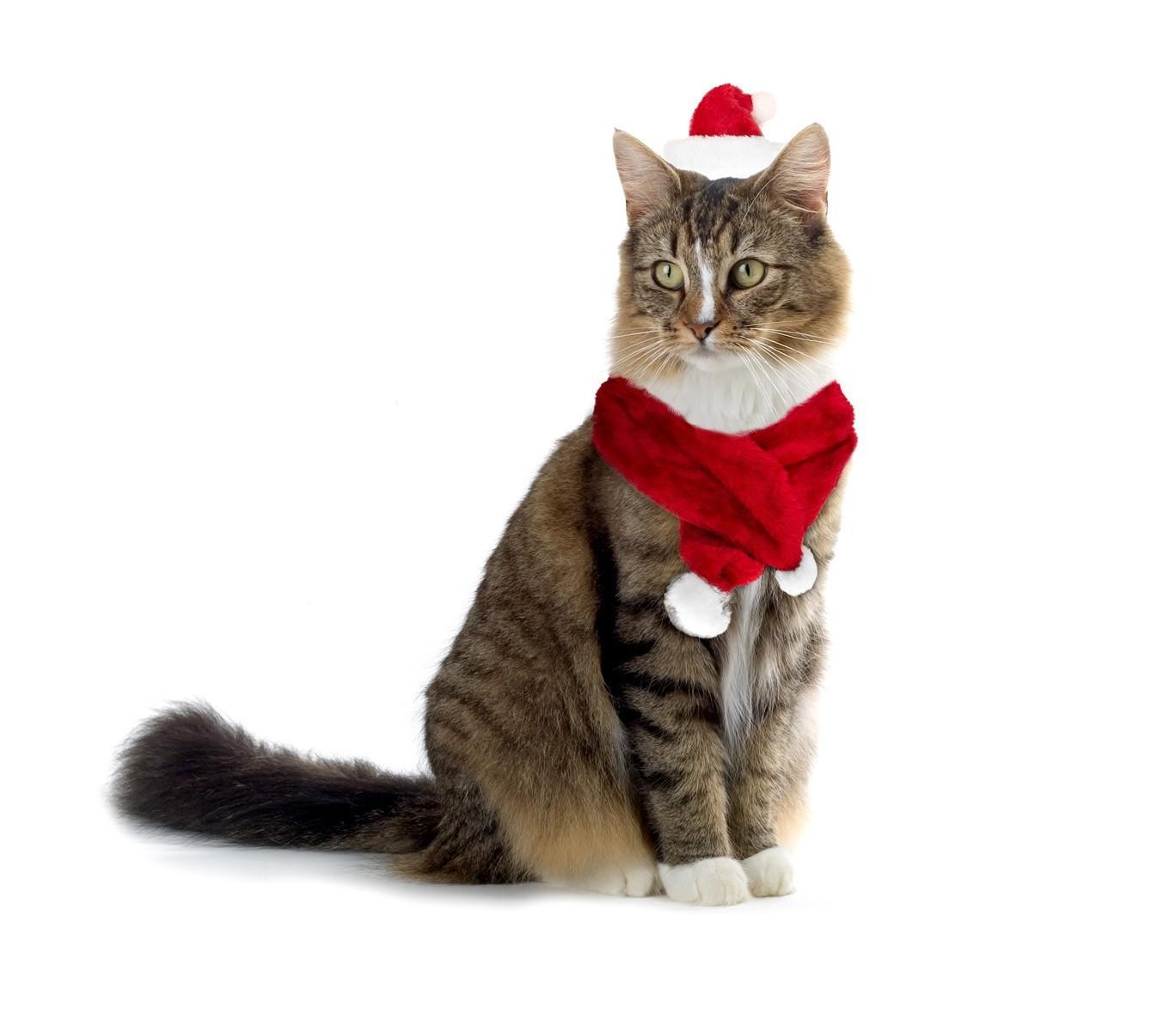 bonnet noel chat 064234 Set bonet écharpe PÈRE NOËL pour chiens et chats de petite bonnet noel chat